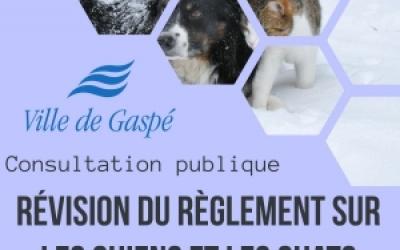 Lancement de la consultation en ligne sur la révision du règlement sur les chiens et les chats