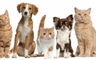 Consultation sur le nouveau règlement des chats et des chiens : les résultats rendus publics